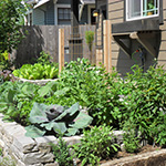 Staggered heights of stone retaining walls in this front yard hold a bounty of edibles for healthy living. Installation by J. Walter Landscape & Irrigation Contractor.