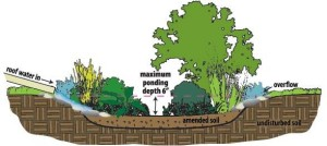 rain garden cross section