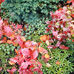 Colors and textures weave together in this planting detail of a front yard rockery in the fall.