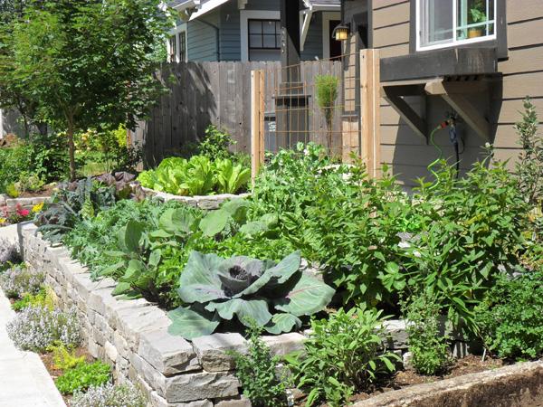 Edible gardens for Edible garden design