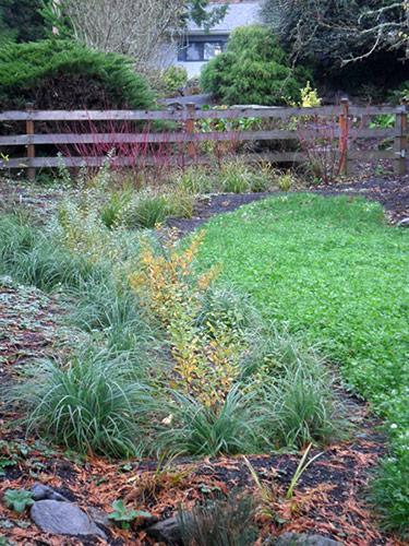 Plan-it-Earth-Design-wetland_lb Rain Garden Design Hillside on rain garden chicago, rain garden new jersey, rain garden kirkland,