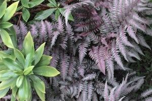Creating texture with Daphne and Ferns
