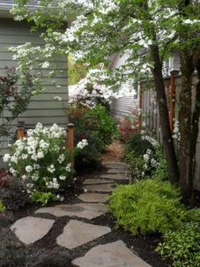 side yard in bloom