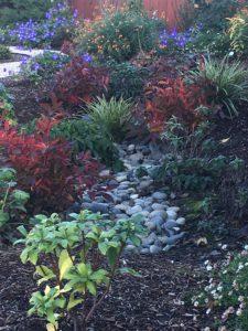 Rain Garden in fall